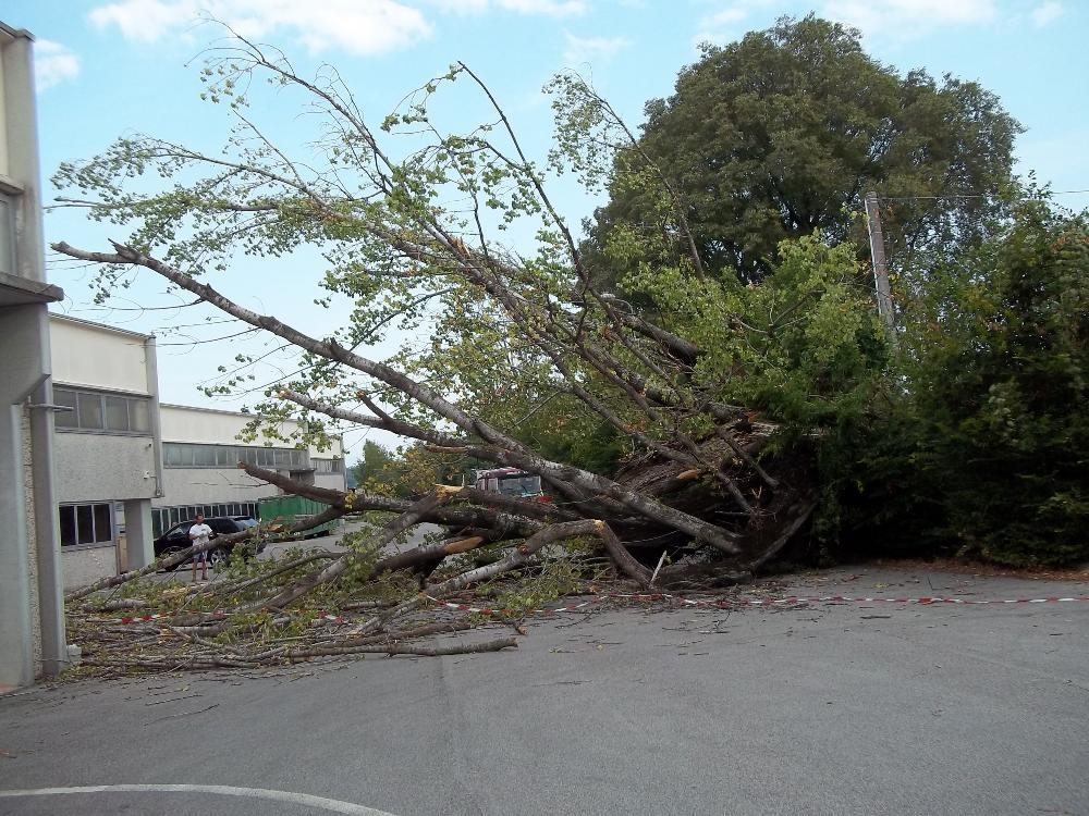 Asporto albero schiantato dal maltempo