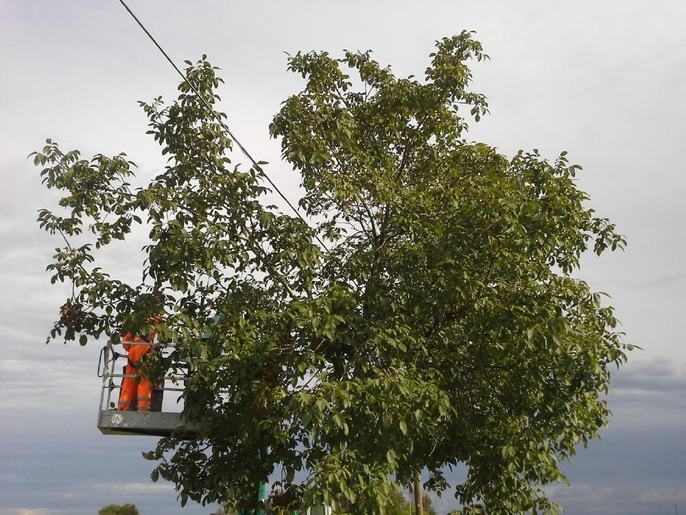 Abbattimento piante presso Az. Agr. Pecol Boin